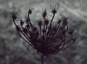 The Gods Planet releases the Andrea Cossu's debut album