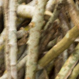 Sayaka Botanic – Mori Ni Naru