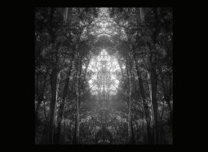 Plants Army Revolver – Oroqen
